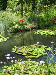 ぐらぐらする暑さの中 モネの庭を散策.jpg