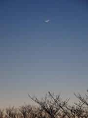 この月!.jpg