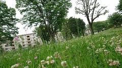 シロツメクサがいっぱい咲いてる.jpg