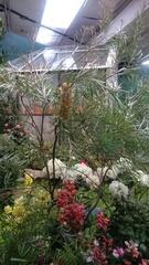 ターシャさんの庭2.jpg
