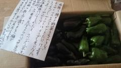 ツヤ姉から野菜が届きました~.jpg