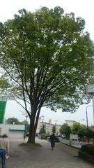 バス停までの道が楽しい.jpg