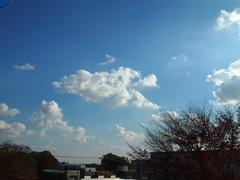 一日気持ちのいい天気でした~.jpg