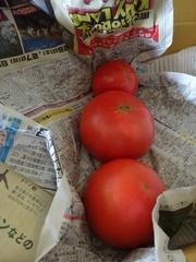 上にはトマトが沢山.jpg