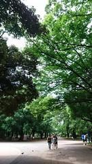 上野は大きい木がたくさんで気持ちいです.jpg