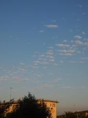 可愛い朝の雲 飛んでるみたい.jpg