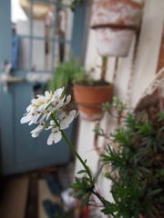 可愛い花が咲いたね~.jpg
