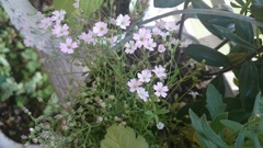 可愛い花だぁ~.jpg