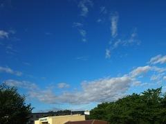 台風一過の朝は.jpg