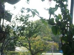 向こうの桜の木が少し紅葉し初めて.jpg