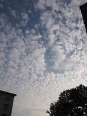 団地の空も秋仕様.jpg
