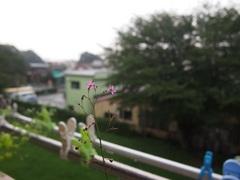 夕方突然強い雨が.jpg