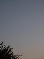 夕方5時半の月.jpg