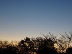 夕陽が落ちて木の枝も寒そうね.jpg