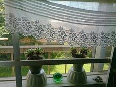 外の緑と部屋の緑と.jpg