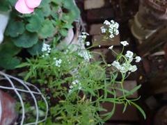 小さな花が咲いて.jpg