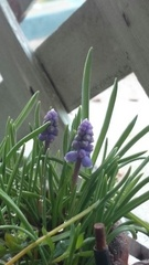 春がきて.jpg