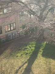 春淡く.jpg