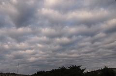 昨日の朝の雲 モコモコ絨毯を敷き詰めたよう.jpg