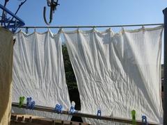 暑い! 日よけカーテンの出番です.jpg