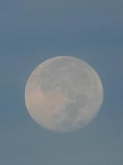 朝の月も美しい.jpg