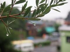 朝方 強い雨が降って.jpg