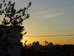 朝焼けが美しい 静かな朝.jpg