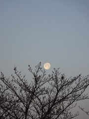 朝5時半過ぎ あっ!月が!.jpg