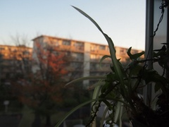 朝6時半 朝陽は仕事部屋の方から回って.jpg