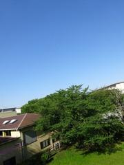 朝8時 何ていい天気!.jpg