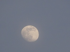 未だ明るい内のお月さま きれいね~.jpg