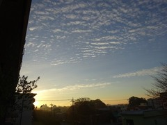柔らかな朝です~.jpg