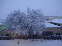 桜の木寒そう.jpg