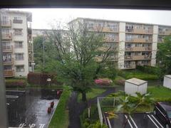 突然の雨 予報通りです.jpg