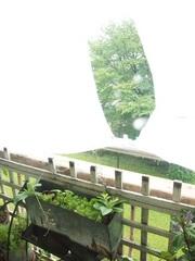 突風と大雨でカーテンがちぎれそう.jpg