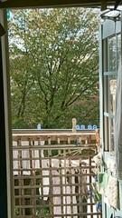 窓いっぱいの幸せ.jpg