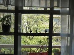 窓の外は新緑の世界に.jpg