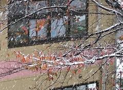 紅葉に雪か いい感じね.jpg
