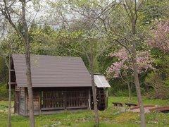 花ミズキと八重桜と水車と.jpg