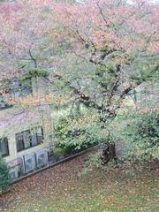 落ち葉が散って寒々してきます.jpg