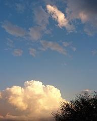 見てください!夕方の入道雲.jpg