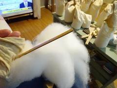 貴女はどれだけ綿を食べるの~?(笑).jpg