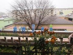雪です 花も開けない寒さです.jpg