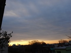雲が空に蓋をしている様な朝でした.jpg