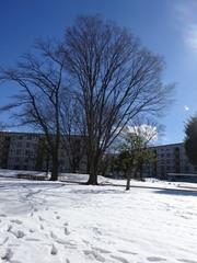 青空と雪 美しい.jpg