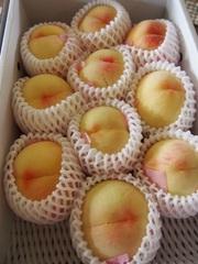 0、岡山のパリ旅友から美味しい桃が.jpg
