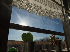 3時前 窓際は温かいけどね~.jpg