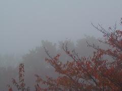 7時半でもこの霧です.jpg