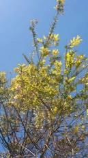 myさんのお姉さんのお家の桜 綺麗ね~.jpg