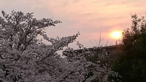 2018-03-28T08:14:21.JPG